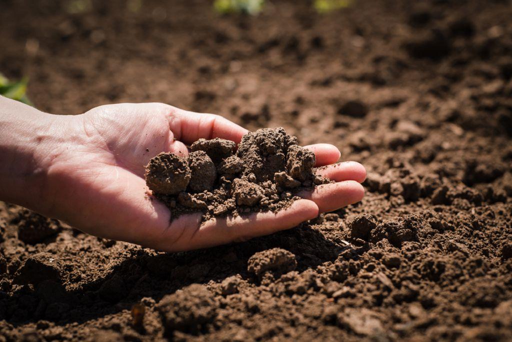 Картинки почва земля